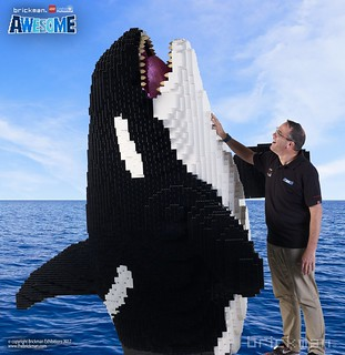 LEGO® and DUPLO® Brick Orca