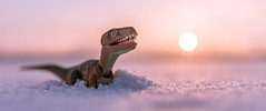 Old Buddy (Reiterlied) Tags: d500 dslr dino dinosaur nikon photography raptor reiterlied snow stuckinplastic sunset toy velociraptor winter