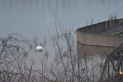 Flooded Point Park Parkersburg, WV (Dinotography24) Tags: parkersburg floodwater point park 2018 wv westvirginia