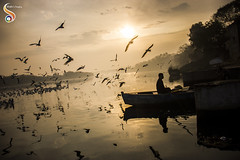 Silhouetted story (Shikher Singh) Tags: boat birds morning yamuna yamunaghat water river gulls flyingbirds horizon dawn silhouette sun seagulls siberiangulls scenary shikherâsimagery