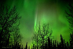 Cosmic Colors (Katy on the Tundra) Tags: northernlights auroraborealis winter nightsky