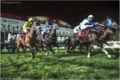 DSC03216 copy (Services 33159455) Tags: qatar doha horse racing qrec emir horseracing raytohgraphy