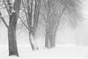 Schneegestöber (Petra Runge) Tags: schnee baum park winter landschaft schwarzweis monochrome weg nebel misty tree bw landscape snow