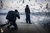 Katappa moment (Shikher Singh) Tags: siberiangulls gulls seagulls yamuna photographer camera shooting birder birdwatching flying migaratorybirds bank flock shikherâsimagery