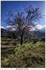 Almendro en flor (yoni103) Tags: sigma sigma2470 montesdelapalma canon6d canarias canon cielos almendrosenflor lapalma lucroit filtros f