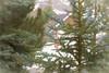neighbors (Karon Elliott Edleson) Tags: woods pines cedars house serene isolation bigbearlake