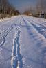 09Fietspad (lifetol74) Tags: snow sneeuw sluiskil zeeland zeeuwsvlaanderen zealandicflanders zealand netherlands nederland