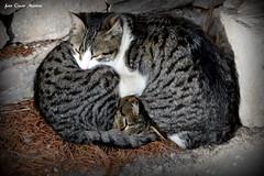 Un abbraccio al mondo. (oscar.martini_51) Tags: animali gatti abbracci