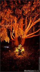 Enchanted Gardens 2017 - 247 (mchenryarts) Tags: arcen dunkelheit entertainment event events farbe fotojournalismus kasteeltuinen laternen licht lichtinszenierung lichtspektakel niederlande parkleuchten photojournalism schloessgaerten show garten laser lasershow