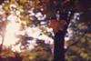 Oak leaf (suxarik) Tags: contax g1 contaxg contaxg1 carlzeiss zeiss planar af rf rangefinder film analog expired kodak kodakekatchrome ektachrome e100vs color positive slide reversal e6 diy selfdeveloped scanned imacon imaconflextightphoto summer colors