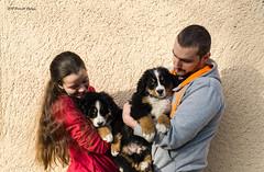 DSC00291 (sportsHUN) Tags: landscape babys dogs puppies portre