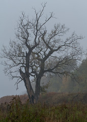 Dixon_JB_438_3937 (Joanne Bouknight) Tags: bunkhouse deadtree dixonwaterfowlrefuge illinois mist morning rain storm thewetlandsinstitute yard
