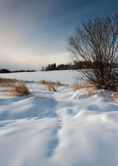 Walk this way (googling2000g) Tags: sturgeoncounty alberta winter snow greenspace lois hole