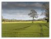 North Yorkshire (johnhjic) Tags: johnhjic tree trees field clouds view nikon hasselblad helperby yorkshire green blue brown northyorkshire track tracks crop