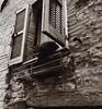 Un gatto. (Emanuele Joshua Sottile) Tags: italy umbria itali italia turist assisi window finestra felino cats cat gattone gattonerei gatto
