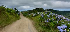 Naturaleza en estado puro (Rafa perena) Tags: flores naturaleza cielos paisaje landscapes scenery azores islas colores awesome senderismo montaña mountain nikon granangular sigma1835