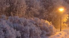IMG_4348 (Mr Thinktank) Tags: raureif frost