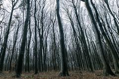 Im Wald (bernhard huber) Tags: wald mödling niederösterreich anninger spazieren wienerwald winter nature natur loweraustria