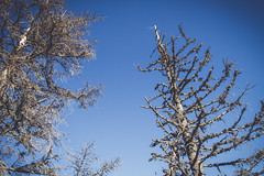 (c) Wolfgang Pfleger-8517 (wolfgangp_vienna) Tags: niederösterreich loweraustria austria österreich schneeberg schneebergland herbst autumn colorful bunt wald wiese blue blau blauerhimmel