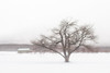 Calmness (jasohill) Tags: 2018 winter nature city tangled iwate cold covered solitary barn tree hachimantai clouds photography life snow calm frozen branches japan ice