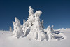 Natural snowmans (PaulusMrazák) Tags: snow snowland iceland ice tree fir snowtree snowtrees tress white winter winterland winterwonderland wonderland wondersosfwinter slovakia matrinky slovensko martinskehole martinskéhole snowman snowmans