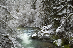 Fernview Recreation area, Oregon (icetsarina) Tags: winter snow oregon forest rocks moss fresh fernview