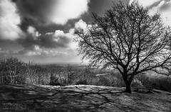 St Anne's view (Photography by Julia Martin) Tags: photographybyjuliamartin malvernhills mono monochrome blackandwhite worcestershire treesilhouettes shadows emptybench he
