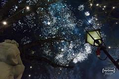 Starry Sky (LUC4SB) Tags: cz czech czechrepublic fireworks blue lamp sculpture newyear silvestr branches tree
