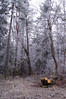 Frosty Forest (Felicia Brenning) Tags: frosty forest woods nature natur frost frozen winter vinter cold january trees pine pinetrees firtrees fir white sun light sunlight outside outdoors pretty sweden scandinavia swedish sony sonyalpha sonyslta57 sonya57