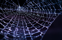 17/365 - Tangled web (EYeardley) Tags: spiderweb web tangledweb nature simplenature nikon sigma nikond3300 365 3652018 day17 17thjanuary2018 wheresthespider