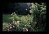 Duke Gardens July 2015 9.33.12 PM (LaPajamas) Tags: nc flora dukegardens gardens
