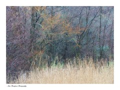 The wonderful colours of winter (alan ET) Tags: wintercolours colours cripplegatelake southwatercountrypark westsussex olympus40150mmf4f56