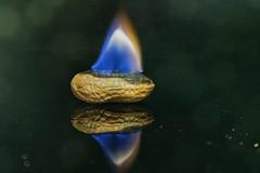 Peanut on fire. (Marina Is) Tags: macrofotografia peanutonfire fuegi llama flame cacahuete ardiendo macromondays ~☆~ hmm