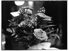 Film developed and scanned (davidyouhas) Tags: film 120 developed scanned roses mamiya rb67 medium format