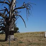 Tintinara. On the historic Tintinara sheep station the lone grave of property founder William Harding. thumbnail