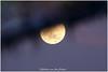 moon reflected in the water (Hetwie) Tags: brouwhuis bluemoon maan evening moon reflection reflectie avond blauwemaan supermaan