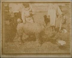 A baby rhinoceros tamed with sugar. Beside it Jorma and Kirsti Gallen-Kallela with Djonogi and a dog. (The Gallen-Kallela Museum) Tags: africa afrikka brittisheastafrica brittiläinenitäafrikka rhinoceros sarvikuono animal eläin