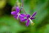 Madeira Storchschnabel (ramonaschmitt) Tags: storchschnabel lila gelb natur nature nikond3300 nikon tamron90mm gewächs