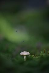 Small mushroom (amoritz57) Tags: natur svamp