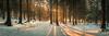Pines Wood panorama (jatsb94) Tags: lancashire winter sun panorama cold greatharwood sunburst trees woods shadows panoramic england uk