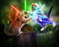 jedi kittens (robert_baker39) Tags: cute kitten funny jedi force starwars