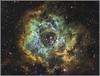 "The Rosette Nebula in Monoceros (Lee ""Pulitzer"" Pullen) Tags: skywatcherevostar80eddspro eq5 zwoasi1600mmc nebula rosettenebula monoceros deepskyobject dso cityastronomy cityastrophotography amateurastrophotography amateurastronomy lightpollution narrowband hubblepalette ngc2237 ngc2238 ngc2239 ngc2244 ngc2246 astrometrydotnet:id=nova2388010 astrometrydotnet:status=solved"