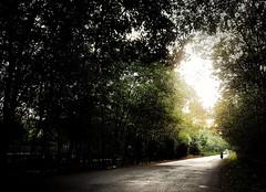 2018-01-12_11-34-21 (hmquan_) Tags: forest rừng road đường xe chiều nắng cây