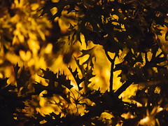 Deep Ellum (BurlapZack) Tags: olympusomdem5markii olympusmzuikoed60mmf28macro vscofilm pack01 dallastx deepellum thenines autumn leaves bokeh availablelight handheld lowlight highiso drinkandclick macro closeup shadows light streetlamp orange yellow leaf deciduous fall microfourthirds