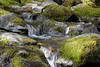 Water and Rocks (Vincent Ferguson) Tags: mossy moss natural waterfall water botanical nauture green outdoor rocks