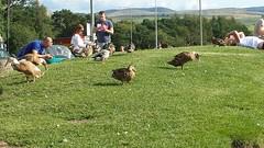 Tebay (davidmcnuh) Tags: england cumbria tebay motorway services duck bird westmorland