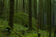 Watch the Mist Blow (Kristian Francke) Tags: forest green nature bc canada pentax moss tree trees british columbia landscape woodland wilderness