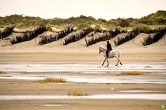 Horse ride (petrOlly) Tags: europe europa germany deutschland borkum island eastfrisia ostfriesland beach northsea nordsee see sea morze nature natura przyroda animals animal water landscape