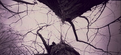 Metasequoia glyptostroboides (Rosenthal Photography) Tags: diafilm rodinal12520°c18min ff120 color winter lochkamera januar natur 20180103 asa100 familie pinhole mittelformat garten fujiprovia100f 6x12 treu e6 analog zeroimage612b landscape nature january mood zero image 612b 40mm f158 fuji provia 100f rodinal 125 epson v800 tree metasequoiaglyptostroboides metasequoia