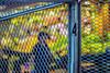 20160726-082949-Barcelona (jramosgsa) Tags: street urban scene city architecture life streetphotography streetcolor everybodystreet flaneur urbanexplorer barcelona reja grid boqueria market